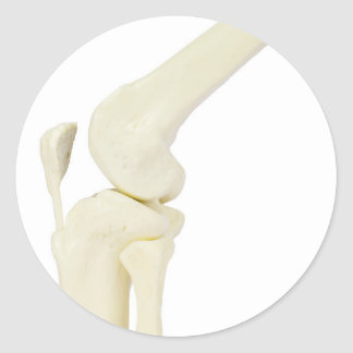 Knee joint model of human leg classic round sticker