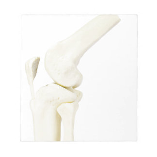 Knee joint model of human leg notepads