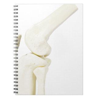Knee joint model of human leg spiral notebook