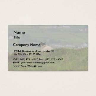 Knocknara Ireland Sheep Lambs Business Card
