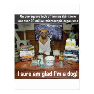 Knowledge Dog Microscopic Organisms on Skin Postcard