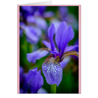 Known as a February birth flower the bearded Iris Card