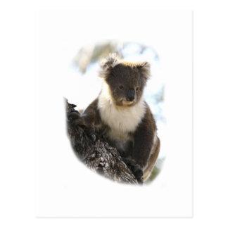 Koala 2 postcard