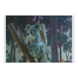 Koala 3D Anaglyph Poster