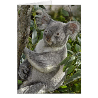 Koala Bear 2 Card