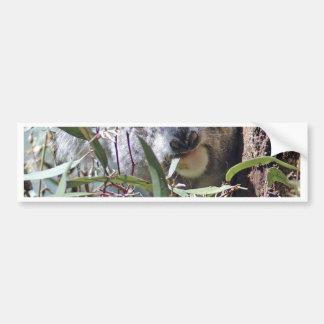 Koala bear bumper sticker