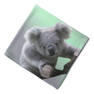 Koala Bear Kerchief