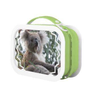 Koala Bear Lunch Box