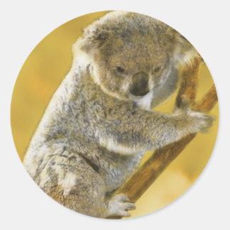 Koala Bear Round Sticker