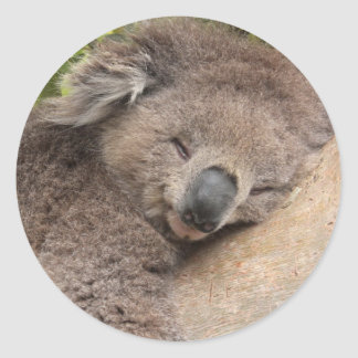 Koala Bear Sleeping Stick Round Sticker