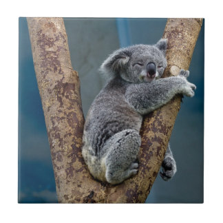 Koala Bear Sleeps Hugging A Tree Tile