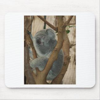 Koala Bears Aussi Outback Destiny Nature Mousepads