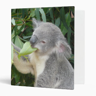 Koala Eating Gum Leaf 3 Ring Binders