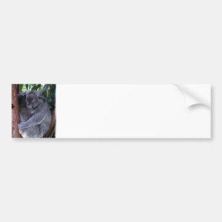 Koala Family Bumper Sticker