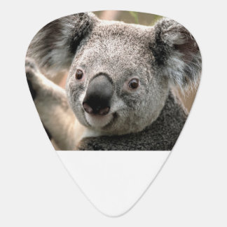 Koala Guitar Picks