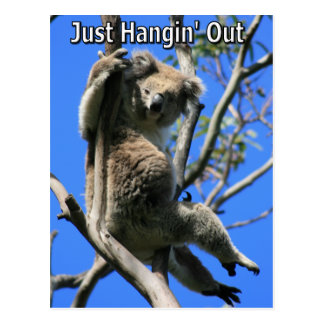 Koala Hanging Out in Australia Postcard