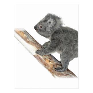 Koala In Profile Climbing Postcard
