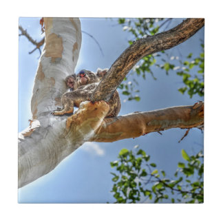 KOALA IN TREE AUSTRALIA ART EFFECTS CERAMIC TILE