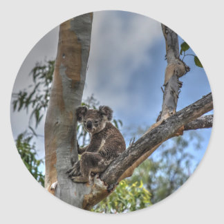 KOALA IN TREE AUSTRALIA ART EFFECTS CLASSIC ROUND STICKER