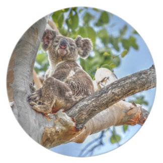KOALA IN TREE AUSTRALIA ART EFFECTS DINNER PLATE
