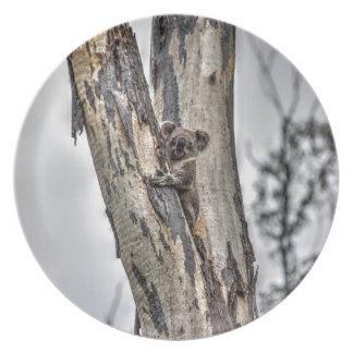 KOALA IN TREE AUSTRALIA ART EFFECTS DINNER PLATES