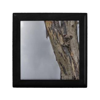 KOALA IN TREE AUSTRALIA ART EFFECTS JEWELRY BOX