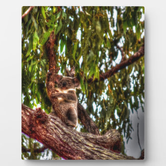 KOALA IN TREE AUSTRALIA ART EFFECTS PLAQUE
