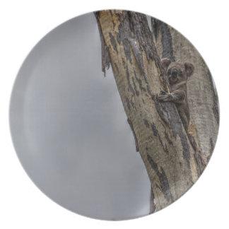 KOALA IN TREE AUSTRALIA ART EFFECTS PLATE