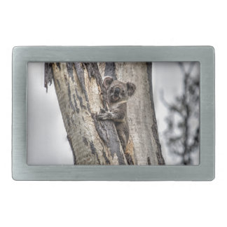 KOALA IN TREE AUSTRALIA ART EFFECTS RECTANGULAR BELT BUCKLES