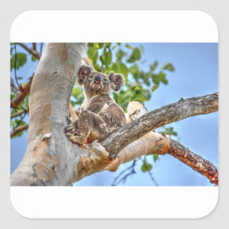 KOALA IN TREE AUSTRALIA ART EFFECTS SQUARE STICKER