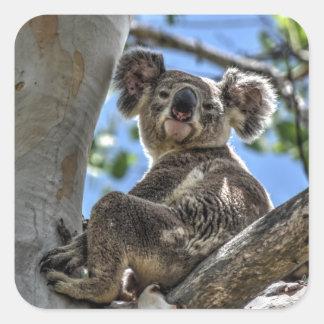 KOALA IN TREE AUSTRALIA ART EFFECTS SQUARE STICKER