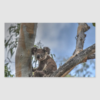 KOALA IN TREE AUSTRALIA ART EFFECTS STICKER