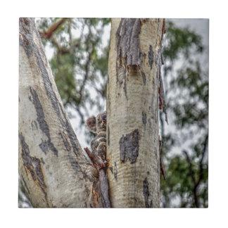 KOALA IN TREE AUSTRALIA ART EFFECTS TILES