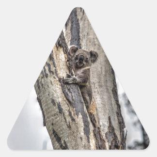 KOALA IN TREE AUSTRALIA ART EFFECTS TRIANGLE STICKER