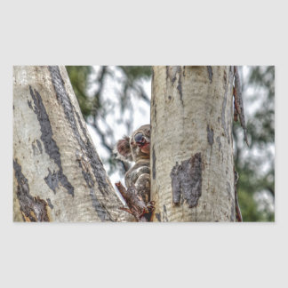 KOALA IN TREE AUSTRALIA WITH ART EFFECTS