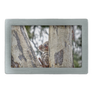 KOALA IN TREE AUSTRALIA WITH ART EFFECTS BELT BUCKLE