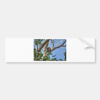 KOALA IN TREE AUSTRALIA WITH ART EFFECTS BUMPER STICKER