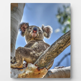 KOALA IN TREE AUSTRALIA WITH ART EFFECTS PLAQUE