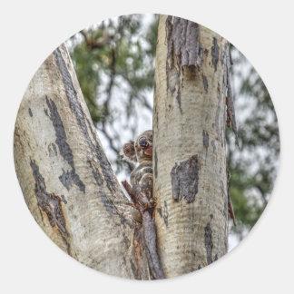 KOALA IN TREE AUSTRALIA WITH ART EFFECTS ROUND STICKER