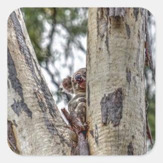KOALA IN TREE AUSTRALIA WITH ART EFFECTS SQUARE STICKER