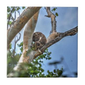 KOALA IN TREE AUSTRALIA WITH ART EFFECTS TILES