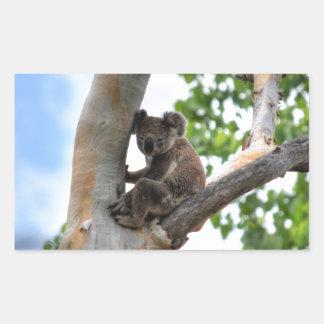 KOALA IN TREE QUEENSLAND AUSTRALIA