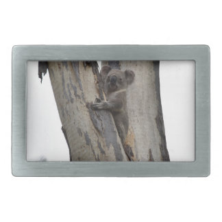 KOALA IN TREE QUEENSLAND AUSTRALIA BELT BUCKLES