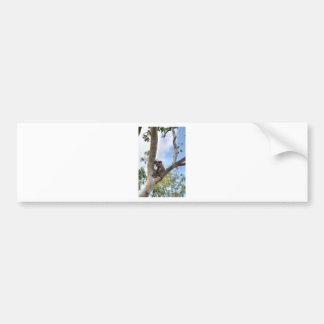 KOALA IN TREE QUEENSLAND AUSTRALIA BUMPER STICKER