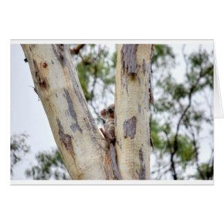 KOALA IN TREE QUEENSLAND AUSTRALIA CARD