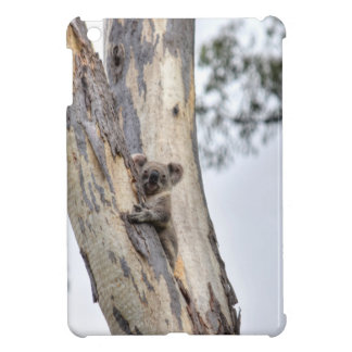 KOALA IN TREE QUEENSLAND AUSTRALIA CASE FOR THE iPad MINI