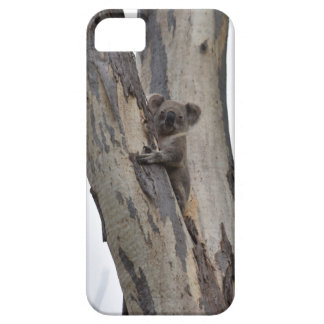 KOALA IN TREE QUEENSLAND AUSTRALIA CASE FOR THE iPhone 5
