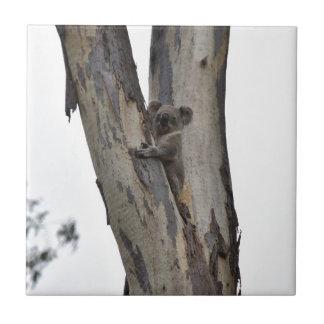 KOALA IN TREE QUEENSLAND AUSTRALIA CERAMIC TILES