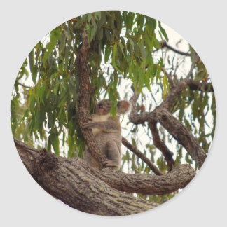 KOALA IN TREE QUEENSLAND AUSTRALIA CLASSIC ROUND STICKER