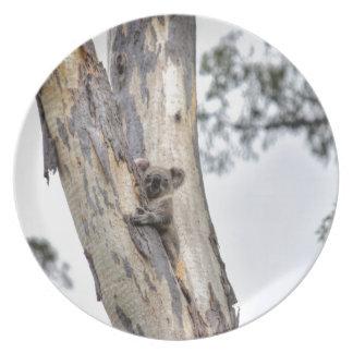 KOALA IN TREE QUEENSLAND AUSTRALIA DINNER PLATES